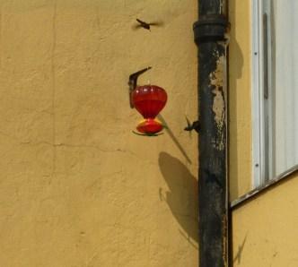 txunum, el colibri en el df.