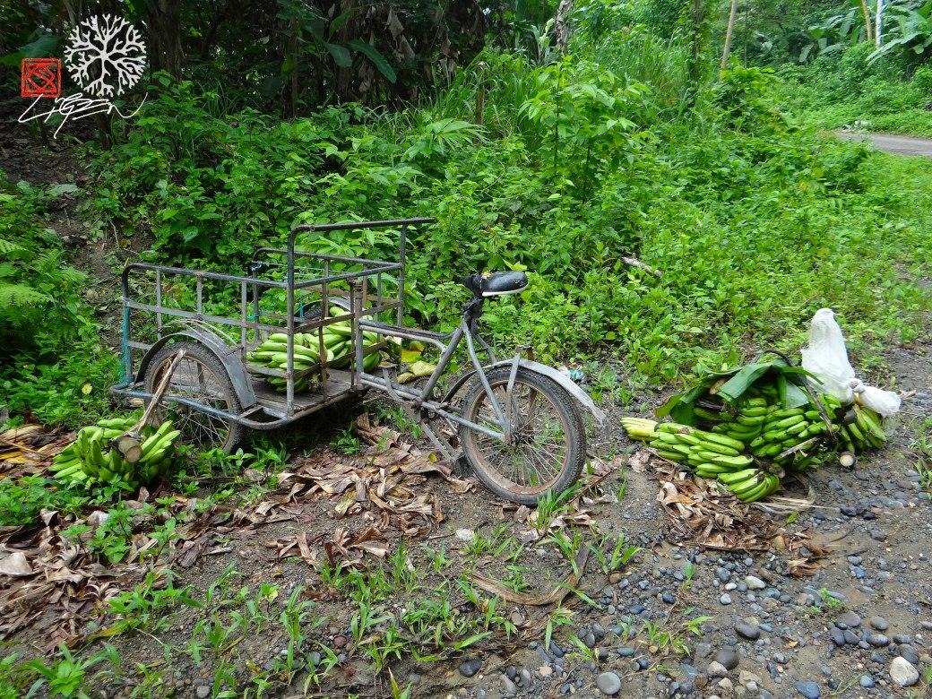 bici guineos