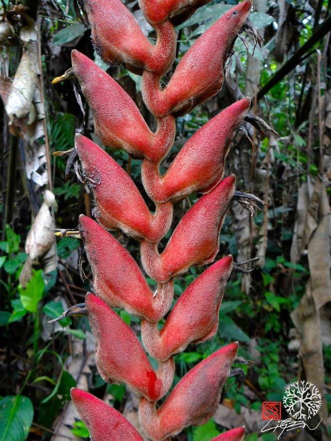 flor palmera