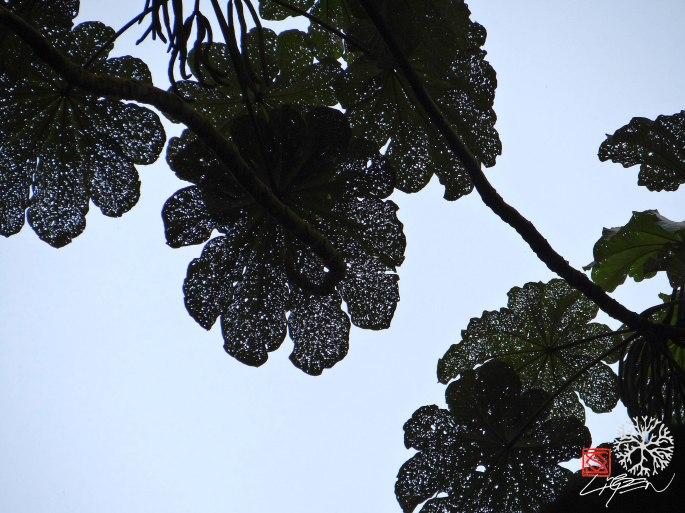 hojas estrellas