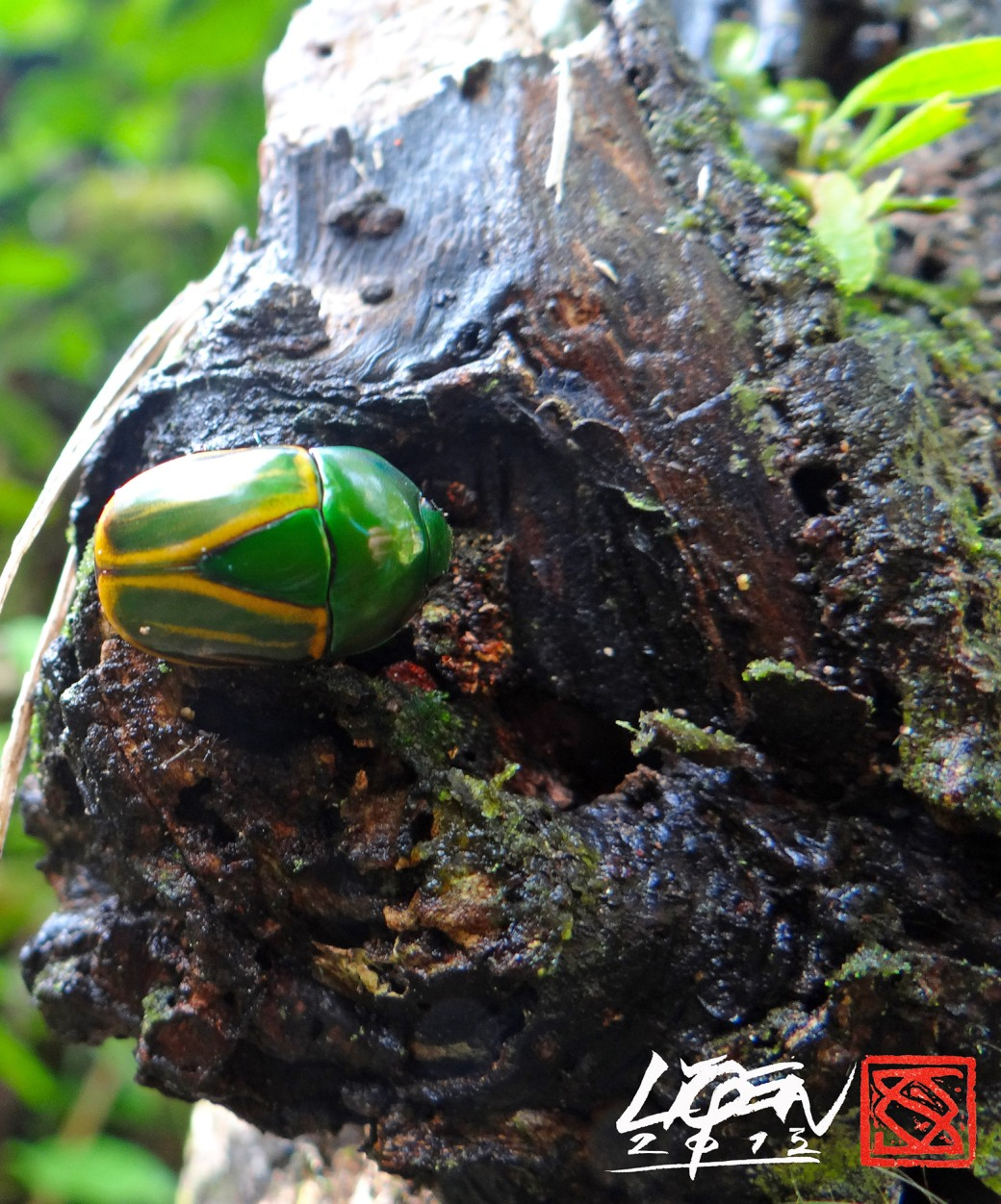escarabajo3B