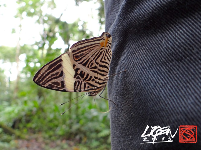 mariposaB