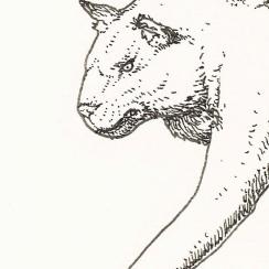 enigma-felino-detail1-e1544071738405.jpg