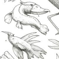 De las escamas y las plumas