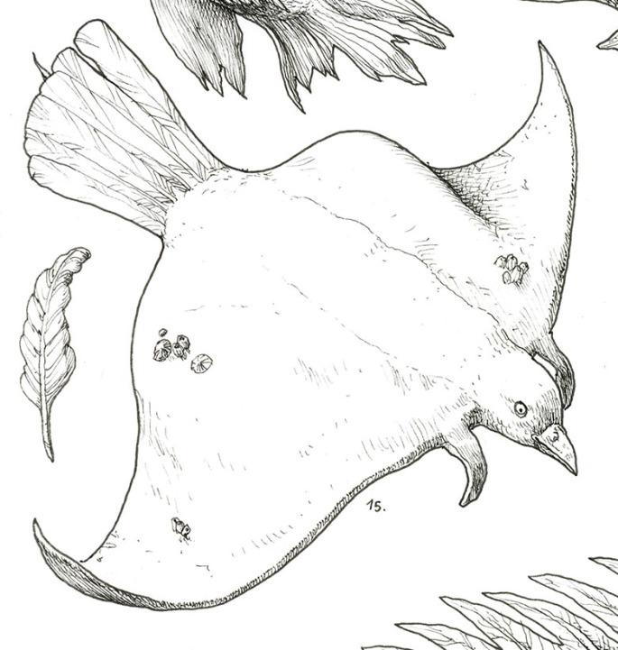 Escamas y plumas Det6